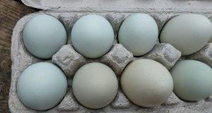 Αυγά εκκόλαψης